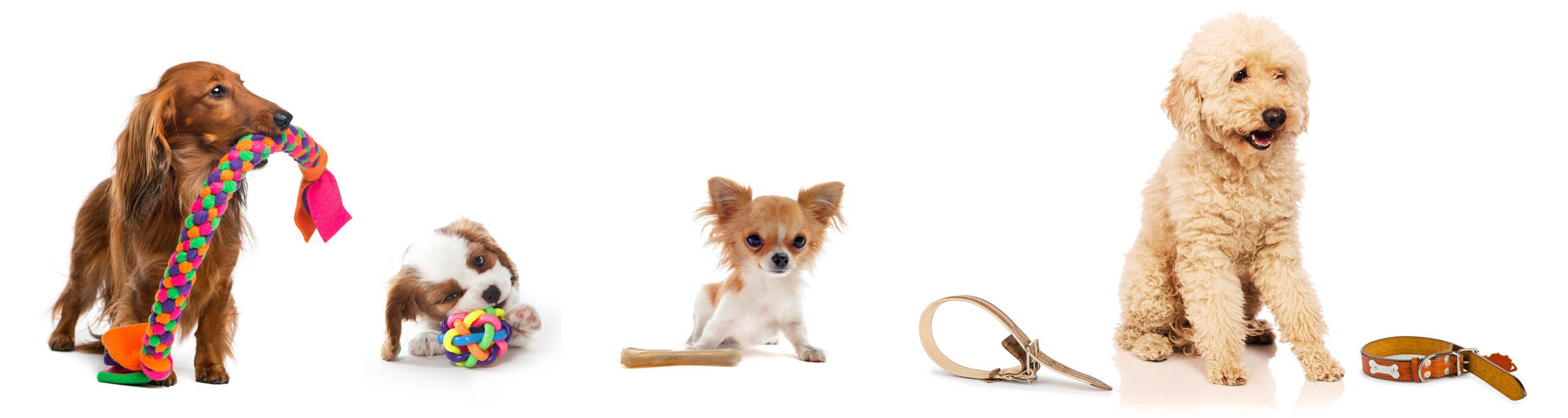 Dog toys Puppy toys Dog collars Dog leads